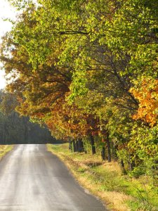 Fall Road Olivia Newport