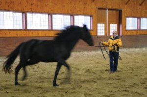 Horse Training Round and Round