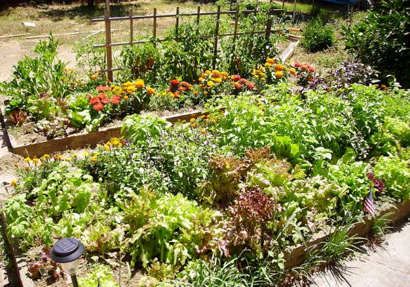 Raised bed--photo by Srl