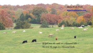 Cattle on Hillside