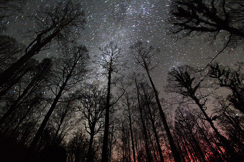 forest-night-sky-space-stars-trees-Favim.com-53155_large