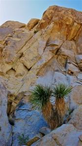 Yucca Life